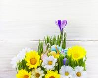 Grama de madeira da flor da mola do cartão do fundo do ovo da páscoa Fotos de Stock