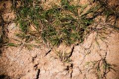 Grama de morte da textura e terra rachada Imagem de Stock