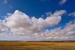Grama de nuvens da neve de China Tibet Imagens de Stock Royalty Free