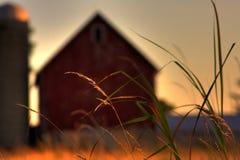 Grama de pradaria da exploração agrícola Foto de Stock Royalty Free