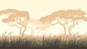 Grama de prado horizontal da ilustração e acácia africana Foto de Stock