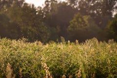 Grama de prado na perspectiva da floresta fotografia de stock royalty free