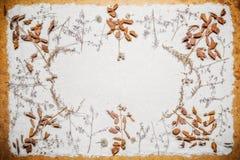 Grama de prado secada na areia Foto de Stock Royalty Free