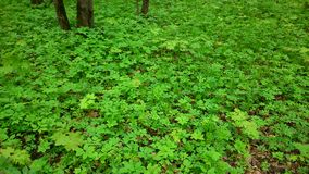 Grama de verde floresta Fotografia de Stock Royalty Free