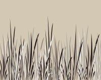 Grama de Whispy Imagens de Stock