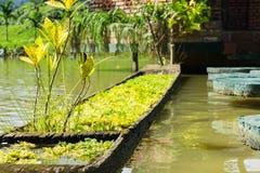 A grama decorativa cresce no barco de madeira no lago Decoração do lago Parque, conserva Fotografia de Stock