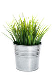 Grama decorativa no potenciômetro de flor Imagens de Stock Royalty Free