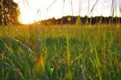 Grama destacada nivelando o sol Fotografia de Stock