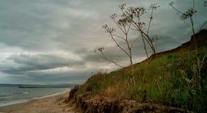 A grama do ano passado e grama nova no litoral, Crimeia imagens de stock