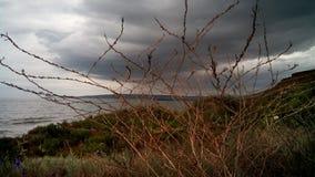 A grama do ano passado e grama nova no litoral, Crimeia fotografia de stock royalty free