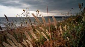 A grama do ano passado e grama nova no litoral, Crimeia Imagem de Stock