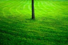 Grama do campo de esporte com árvore Fotos de Stock