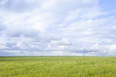 Grama do campo do inverno e paisagem das nuvens Imagem de Stock