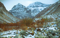 Grama do colosso com fundo das montanhas Imagem de Stock