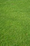 Grama do golfe Imagem de Stock Royalty Free