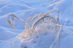 Grama do inverno sob a natureza gelado do ornamento da manhã da neve branca Imagens de Stock Royalty Free