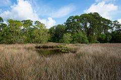 Grama do mar ao longo de um banco de rio com árvores verdes como um contexto Imagens de Stock