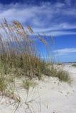 Grama do mar no sol Imagens de Stock