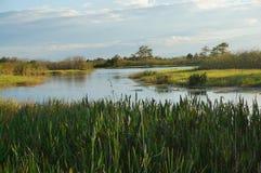Grama do pântano e a albufeira Fotografia de Stock Royalty Free