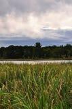 Grama do pantanal Imagens de Stock Royalty Free