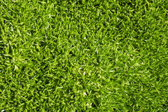 Grama do Scleranthus Fotos de Stock Royalty Free