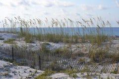 Grama do trigo na praia Imagens de Stock