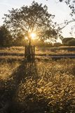 Grama do verão e silhueta de uma árvore imagens de stock