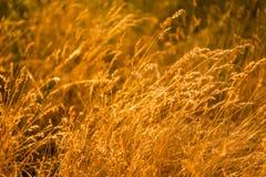 Grama do verão no prado Fotografia de Stock