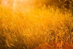 Grama do verão no prado Foto de Stock Royalty Free