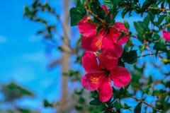 A grama do verão sae das flores para fazer-nos realmente bonitos imagem de stock royalty free