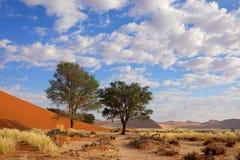 Grama, duna e árvores, Sossusvlei, Namíbia Foto de Stock Royalty Free