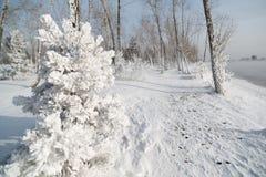 Grama e árvores cobertas com a geada Fotografia de Stock