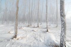 Grama e árvores cobertas com a geada Fotos de Stock