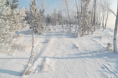 Grama e árvores cobertas com a geada Imagens de Stock Royalty Free