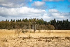 Grama e árvores imagem de stock