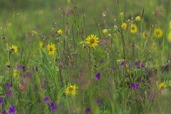 A grama e as flores da montanha nas montanhas após o verão chovem! Fotos de Stock Royalty Free
