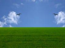 Grama e céu Imagens de Stock