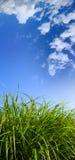 Grama e céu azul Fotografia de Stock Royalty Free