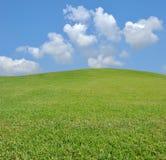 Grama e céu frescos Fotos de Stock Royalty Free