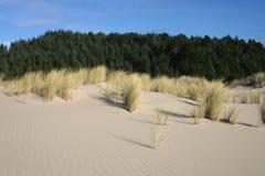 Grama e dunas 1 Imagem de Stock