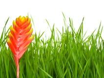 Grama e flor Fotografia de Stock