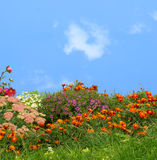 Grama e flores Fotografia de Stock