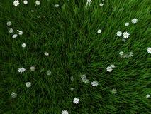Grama e flores Imagens de Stock