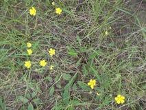 Grama e flores 2 imagem de stock