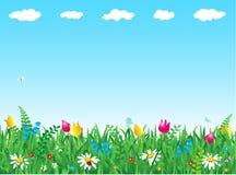 Grama e flores Fotografia de Stock Royalty Free