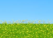 Grama e flores amarelas imagens de stock royalty free