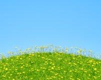 Grama e flores amarelas imagem de stock