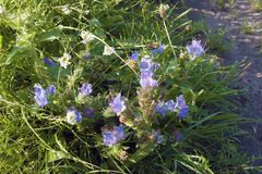 Grama e flores de prado Imagem de Stock Royalty Free