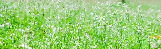 Grama e flores na glândula fotos de stock royalty free