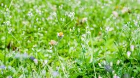 Grama e flores na glândula Fotografia de Stock